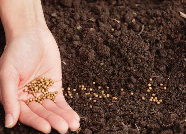 Dispersando semillas en un jardín