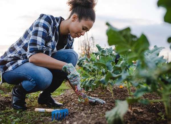 Eligiendo un buen lugar para plantar