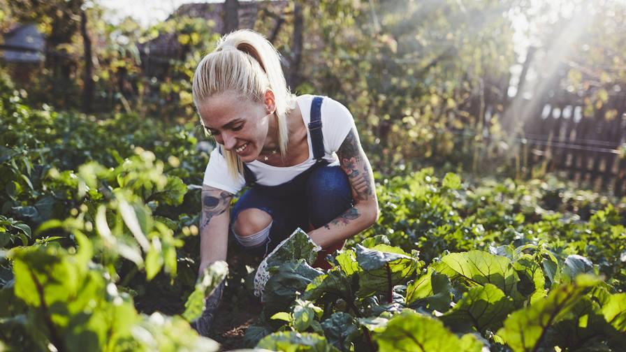 Jardín de vegetales – Los 10 errores más grandes y comunes – Solsken