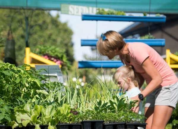 Verifica y compra plantas sin plagas