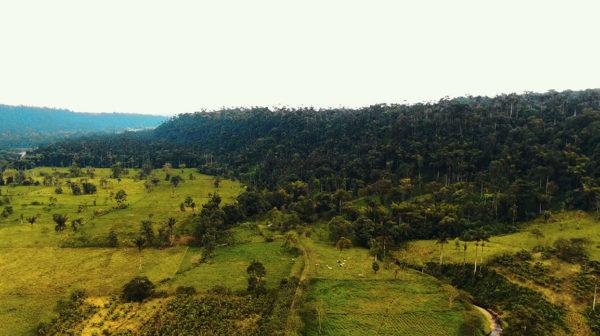 Hacienda Los Bancos - La Florida Valle y bosque