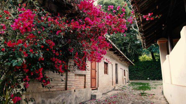 Hacienda Cotacachi Bug