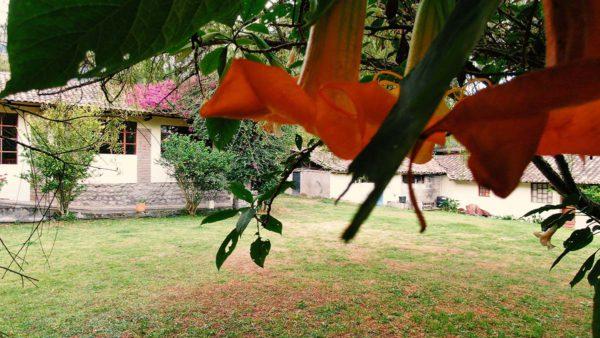 Hacienda Cotacachi Flora