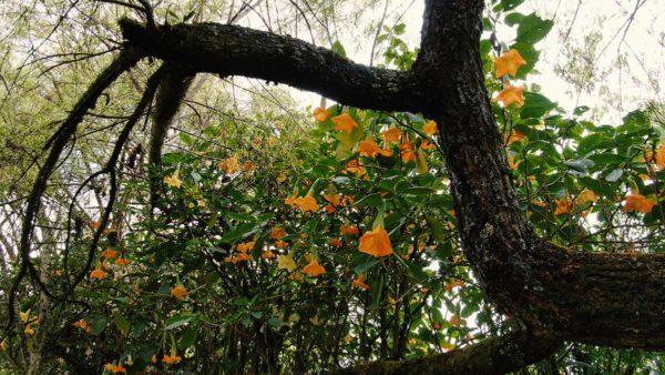 Hacienda Cotacachi FloraT