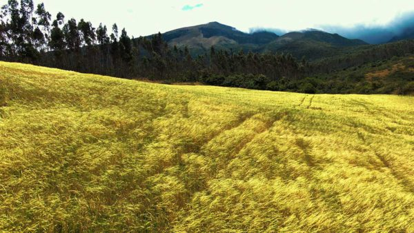 Hacienda Cotacachi Crops