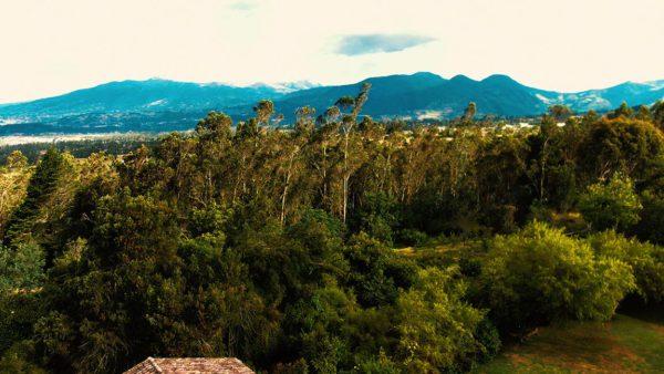 Hacienda Cotacachi Forest