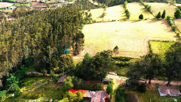 Hacienda Cotacachi Forest Lateral Crops