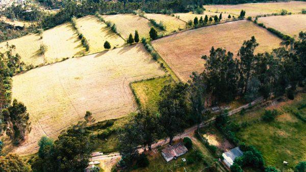 Hacienda Cotacachi Forest Lateral CropsT