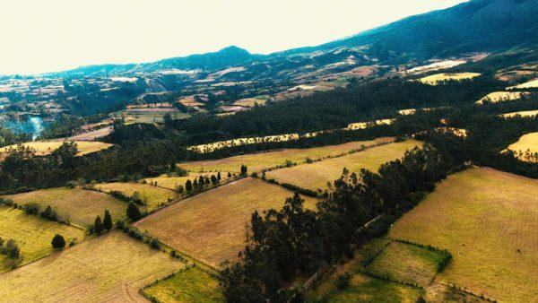 Hacienda Cotacachi Forest Lateral CropsTh