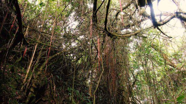 Hacienda Cotacachi Inca Flora